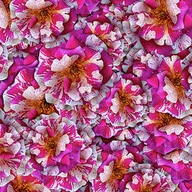 Variegated Rose Collage by Vanessa Thomas