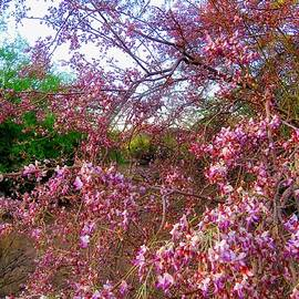 Vekol Wash Desert Ironwood in Bloom by Judy Kennedy