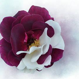 Velvet Rose  by Isabela and Skender Cocoli