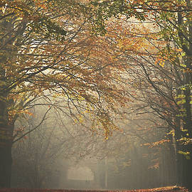 Venturing into autumn by Juergen Hess