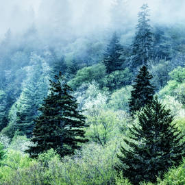 Verdant Forest in the Great Smoky Mountains by Kay Brewer