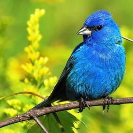 Very Blue Indigo by Lori Frisch