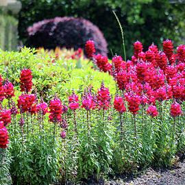 Vibrant Floral  by Cynthia Guinn