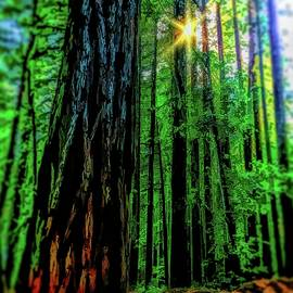 Vibrant Redwood Forest by Christina Ford