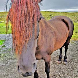 Viking Horses. Norway. by Andy Za