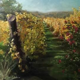 Vineyard gold by Susan Lang