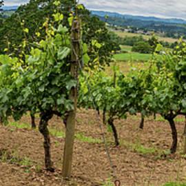 Vineyard Panorama by Jean Noren