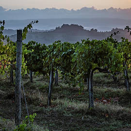 Vineyard Sunrise Tuscany Italy by Joan Carroll