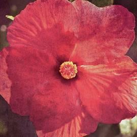 Vintage Hibiscus by David Beard