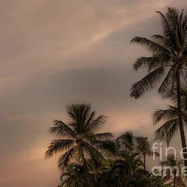 Vintage Palms Hawaii by Kelly Wade