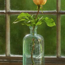 Vintage Rose by John Rogers
