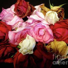 Vintage Roses by Jenny Lee