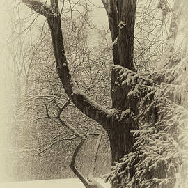 Vintage Snowfall by Denise Harty