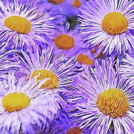 Violet Asters by Alex Mir