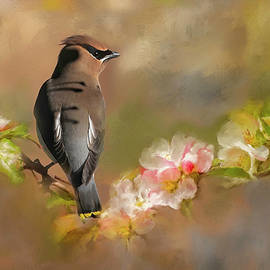 Visiting Cedar Waxwing by Donna Kennedy