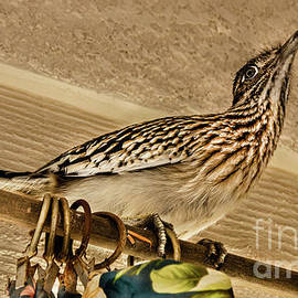 Visiting Roadrunner by Robert Bales