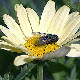 Visitor To A Flower by John Hughes