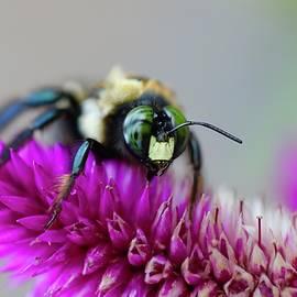Vivid Bee by Kelly J Kreger