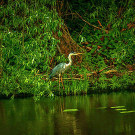 Waiting for fish #j9 by Leif Sohlman