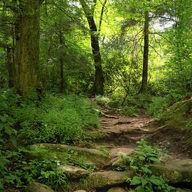 Walk In The Forest by Rebecca Herranen