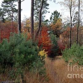 Walk in the Woods by Linda De Klein