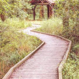 Walk through the Forest by Debra and Dave Vanderlaan