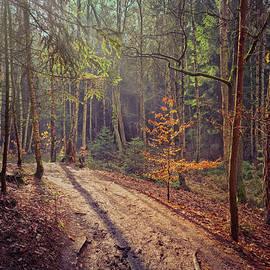 Walk through the woods by Jirka Svetlik