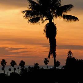 Walking Palm a la Carmen Miranda by Julieanne Case