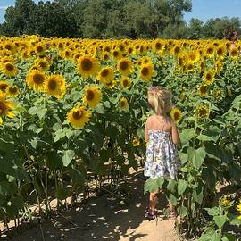 Walking through Sunflower Field by Anne Sands