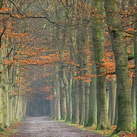 Walking under old beechtrees by Juergen Hess