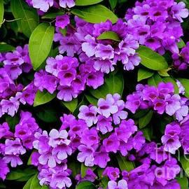 Wall of Purple by Craig Wood