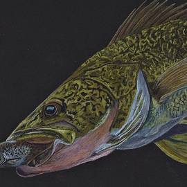Walleye Attack by Jay Johnston