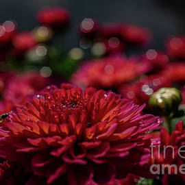 Warm Mums by Linda Howes