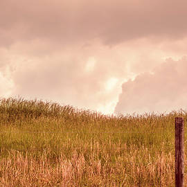 Warm Spring Pasture by Jim Love