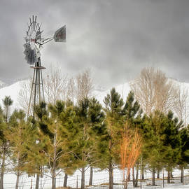 Washoe Valley Winter by Donna Kennedy