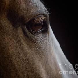 Watching Eye by Lisa Manifold