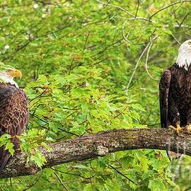 Watching Over the Lake Together - Bald Eagles by Jan Mulherin
