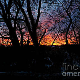 Watching Sunrise In The Timber by Kathy M Krause