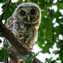 Watching You by Shelly Gunderson