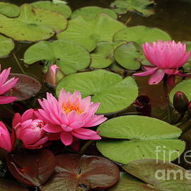 Water Garden Beauty by Christiane Schulze Art And Photography
