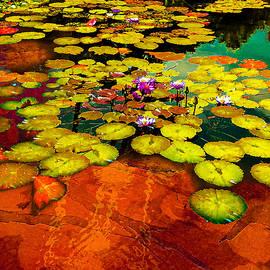 water lilies at Balboa by Jeff Burgess