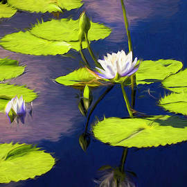 Water Lilies With Reflection Painting by Judy Vincent