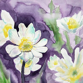 Watercolor - Marsh Marigold Blooms by Cascade Colors