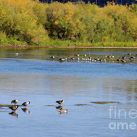 Waterfowl on the Missouri by Kae Cheatham