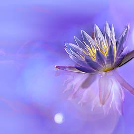 Waterlily Bokeh by Kay Brewer