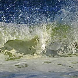 Wave in Delight by Dianne Cowen