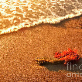 Wave on seaweeds by Vicente Sargues