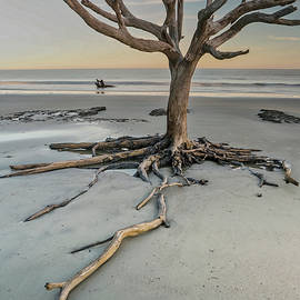 Weathering the Tide at Sunset by Jurgen Lorenzen
