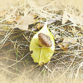 Wee Acorn on a Yellow Leaf by Bentley Davis