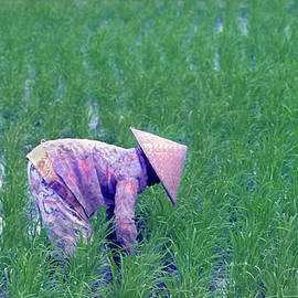 Weeding Rice Field by Jerry Griffin